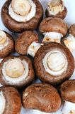 Raw brown cap mushrooms. Royalty Free Stock Photo