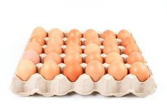 Raw brown Chicken Eggs In paper container tray box. Raw brown Chicken Eggs In paper container tray box isolated on white background royalty free stock images