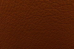 Raw brown leather Stock Images