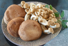 Raw brown mushrooms, close up Stock Images