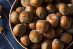 Raw Brown Organic Shelled Hazelnut Filberts Stock Photography