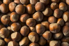Raw Brown Organic Shelled Hazelnut Filberts Stock Image