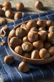 Raw Brown Organic Shelled Hazelnut Filberts Stock Images