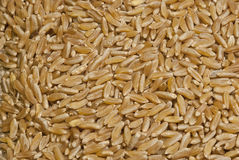 Raw brown rice Stock Images