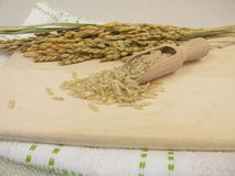 Raw brown rice Stock Photography