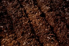 Raw brown soil prepared for planting seed texture. The grooves ground in the garden or field in spring agricultural season. Stock Photography