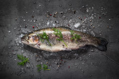 Raw brown trout on ice. With sea salt,  pepper and ingredients. Fresh fish. Food background Royalty Free Stock Images