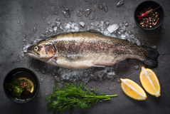 Raw brown trout on ice. With sea salt,  pepper and ingredients. Fresh fish. Top view, copy space. Food background Royalty Free Stock Photography