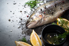 Raw brown trout on ice. With sea salt,  pepper and ingredients. Fresh fish. Top view, copy space. Food background Stock Photography
