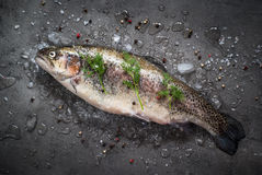 Raw brown trout on ice. With sea salt,  pepper and ingredients. Fresh fish. Top view, copy space. Food background Royalty Free Stock Images
