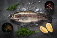 Raw brown trout on ice. With sea salt,  pepper and ingredients. Fresh fish. Top view. Food background Royalty Free Stock Image