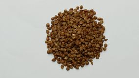 Raw buckwheat grains rotating on white background. stock video footage