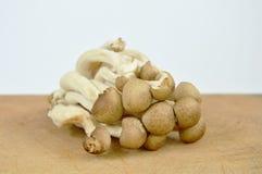 Raw buna shimeji Japanese mushroom on chop block in white background Stock Photos