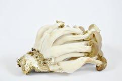 Raw buna shimeji Japanese mushroom on white background Stock Image
