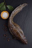 Raw burbot Royalty Free Stock Images