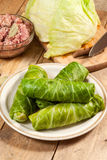 Raw cabbage rolls. Stock Images