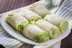 Raw cabbage rolls on a white plate. Cabbage rolls stuffed with meat and rice prepared for cooking royalty free stock photo