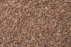 Raw cacao background. High angle background shot of raw Theobroma cacao beans filling entire image frame stock photography