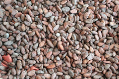 Raw cacao beans Royalty Free Stock Photography