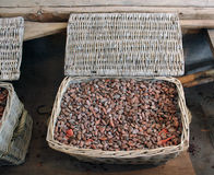 Raw cacao beans. Piled in a basket stock photography