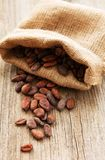 Raw cacao beans. In burlap bag on a wooden table stock images