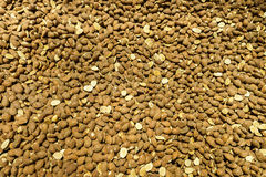 Raw cacao beans Stock Image