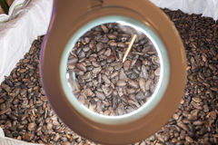 Raw cacao beans Stock Photography