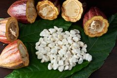 Raw cacao chocoalte fruits. White beans of cocoa on green leafs stock photo