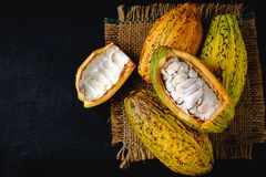 Raw cacao and cocoa pods. On black background royalty free stock photo