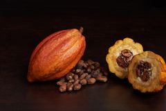 Raw cacao fruit. And dry seeds laying on dark wooden backgound stock images