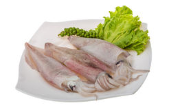 Raw calamari Royalty Free Stock Photography