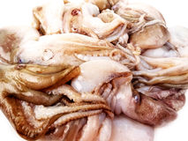Raw calamari (octopus) seafood Stock Images