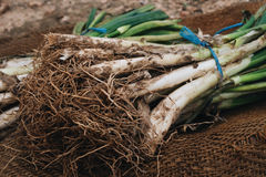 Raw calcots, sweet onions, typical of Catalonia, Spain Stock Photo