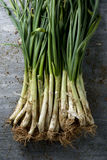 Raw calcots, sweet onions typical of Catalonia, Spain Royalty Free Stock Photo