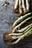 Raw calcots, sweet onions typical of Catalonia, Spain Stock Photos