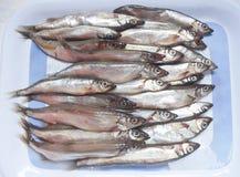 Raw capelin fish Stock Photography
