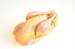 Organic raw guinea fowl. Raw carcase of guinea fowl on white background Stock Photography