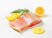 Raw carp fillet Stock Images