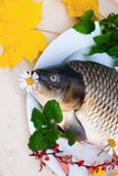 Raw carp fish with leaf and flower. Royalty Free Stock Image