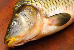 Raw carp fish  on a wooden  board Stock Images