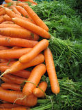 Raw carrots background. Orange fresh raw carrots  with green leaves closeup on the sea market desk Stock Photography