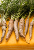 Raw carrots fresh from the garden lined in a row-vertical image stock photography