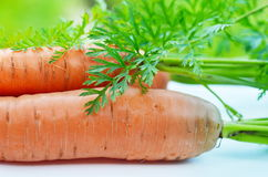 Raw carrots with green tops. Freshly harvested bunch of carrots on a table in the garden Royalty Free Stock Image