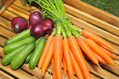 Raw carrots Stock Images
