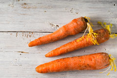 Raw carrots on the white wooden background top view. Raw carrots on the white wooden scratched background top view horizontal Stock Images