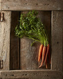 Raw Carrots Royalty Free Stock Photo