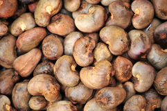 Raw Cashew Nuts. A background of raw cashew nuts stock image