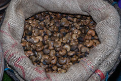 Raw cashew nuts closeup Royalty Free Stock Photo