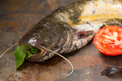 Raw catfish on an old table. Close-up. Top view. Raw catfish on an old table. Close-up Stock Photos