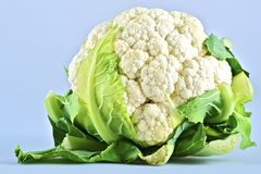 Raw Cauliflower. Closeup Studio Shot. Fresh . Food Photo Collection Stock Images